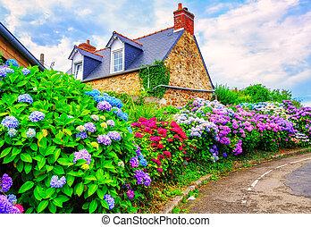 カラフルである, ブリタニー, フランス, hydrangeas, 村, 小さい, 花