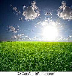 カラフルである, 上に, 太陽の 上昇, フィールド, 小麦, 美しい