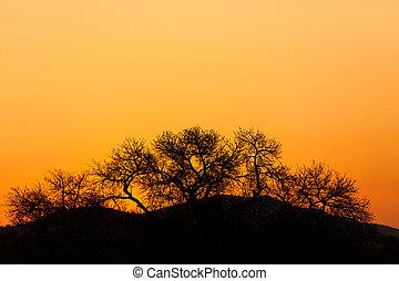 カラフルである, 日没, 中に, アフリカ
