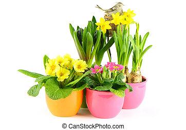 カラフルである, 春の花