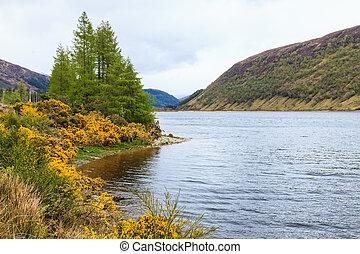 カラフルである, 湖, 黄色, 前方へ, 花, 側