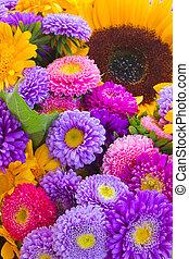 カラフルである, 秋, 花, 背景
