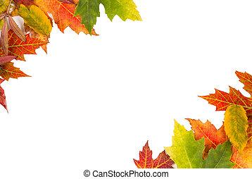 カラフルである, 葉, 隔離された, 秋, 背景, 結婚披露宴, フレーム