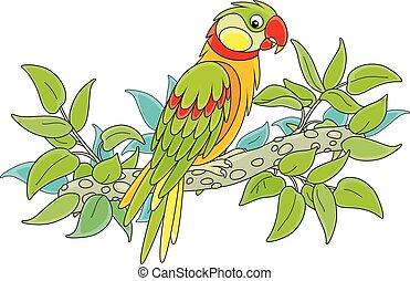 カラフルである, 面白い, トロピカル, ジャングル, オウム