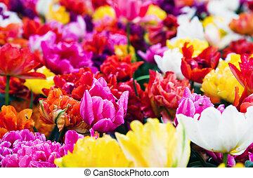 カラフルな花, 中に, よく晴れた日