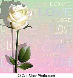 カラードの背景, から, 手紙, 'love', そして, a, 花, の, ホワイト・ローズ