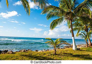 カリブ海, 海岸線, 中に, コロンビア