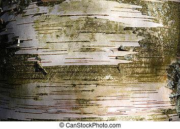 カンバの木, 銀, 手ざわり, トランク