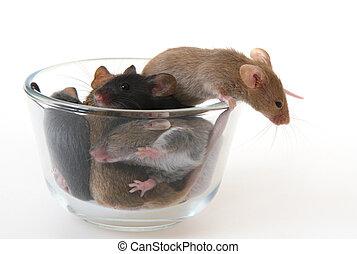 ガラス, マウス