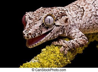 ガーゴイル, gecko