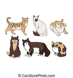 キティ, ネコ科, clipart., パーラー, かわいい, 隔離された, セット, 品種, ベクトル, 漫画, ...