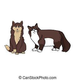 キティ, snowshoe, ネコ科, clipart., パーラー, かわいい, 隔離された, 品種, ベクトル, ...