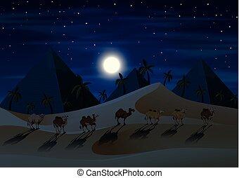 キャラバン, ラクダ, 砂漠の夜