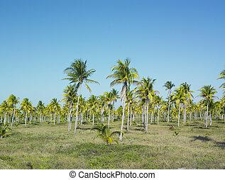キューバ, parque, nacional, del, granma, desembarco, granma, 州