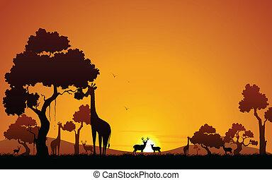 キリン, 鹿, ジャングル
