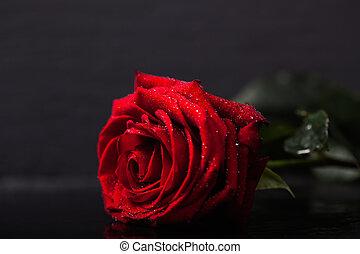 キー, 黒, 低い, バラ, 赤