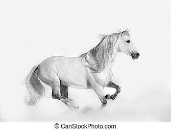 キー, stallion., 美しい, 高く, スタイル, 打撃, andalusian
