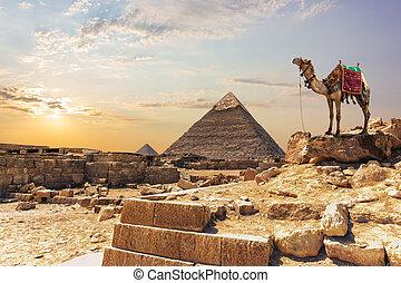 ギザ, エジプト, ピラミッド, khafre, らくだ