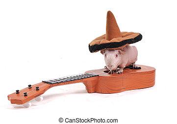 ギター, ギニー, 帽子, 豚