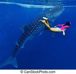 クジラ, 女の子, サメ, snorkeling