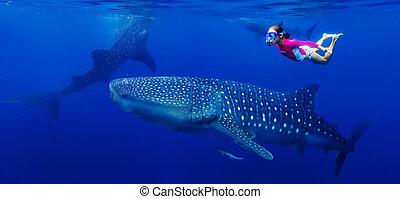 クジラ, 女の子, snorkeling, サメ