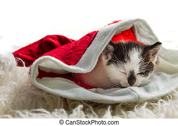 クリスマスの ギフト, 子ネコ