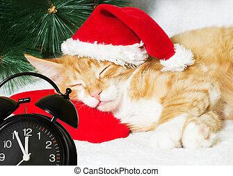 クリスマス, ねこ