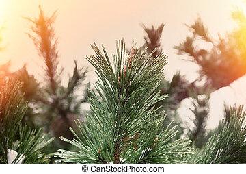 クリスマス, ボーダー, 芸術, design., 休日の 装飾