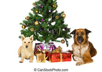 クリスマス, 幸せ, 木, 犬, 下に