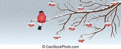 クリスマス, 背景, 小鳥