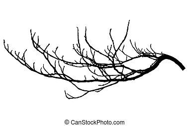 クリ, ブランチ, silhouette., illustration., 木の枝, ベクトル