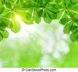 クリ, 春, 木, 葉