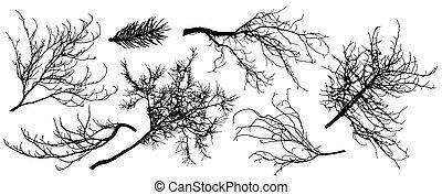 クリ, 木。, シルエット, モミ, illustration., セット, 木, シナノキ, ベクトル, ブランチ, オーク, ∥など∥.