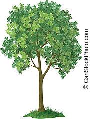 クリ, 木。, ベクトル