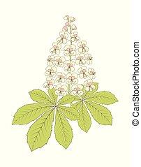 クリ, 白い花
