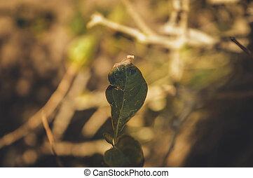 クローズアップ, の, 古い, 緑の葉