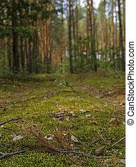 クローズアップ, の, 森林, こけ, コーン, そして, 球果を結ぶ, 小枝