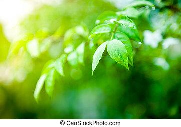 クローズアップ, の, 水滴, 上に, 緑の葉
