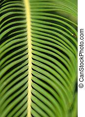 クローズアップ, の, 緑の葉