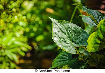 クローズアップ, の, 緑の葉, 庭で