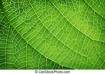 クローズアップ, の, a, 緑の葉