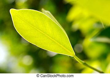クローズアップ, 映像, 葉, 緑