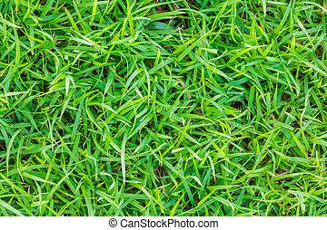 クローズアップ, 春, イメージ, 緑, 新たに, 草