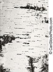クローズアップ, 樹皮, 自然, texture., シラカバ
