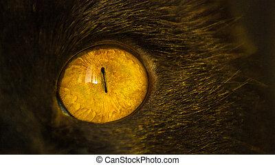 クローズアップ, 目, 黄色, 黒, 日没, 猫