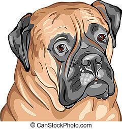 クローズアップ, 肖像画, bullmastiff, 品種, ベクトル, 犬