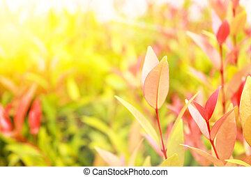 クローズアップ, 背景, スペース, 自然, コピー, エコロジー, 使うこと, 赤い緑, 風景, 壁紙, 自然, concept., 光景, 葉, ぼやけた背景, 新たに, 草木の栽培場, 植物, 庭
