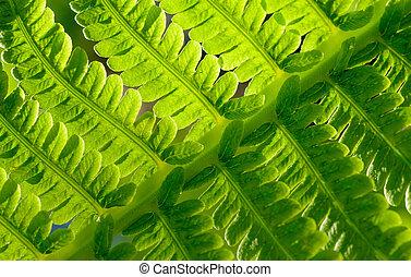 クローズアップ, 自然, イメージ, leaf., シダ, バックグラウンド。, 緑, 新たに