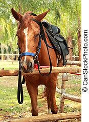 クローズアップ, 馬, 中に, ∥, 農場
