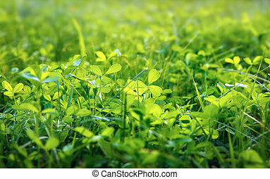 クローバー, 浅い, 緑, dof, 背景